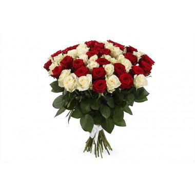 51 красная белая роза